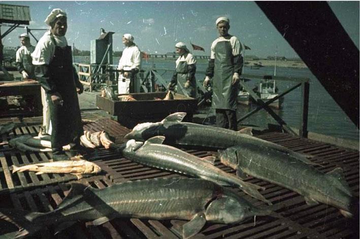 Становление и развитие рыбного промысла в Астраханском крае (IX-XIV вв)