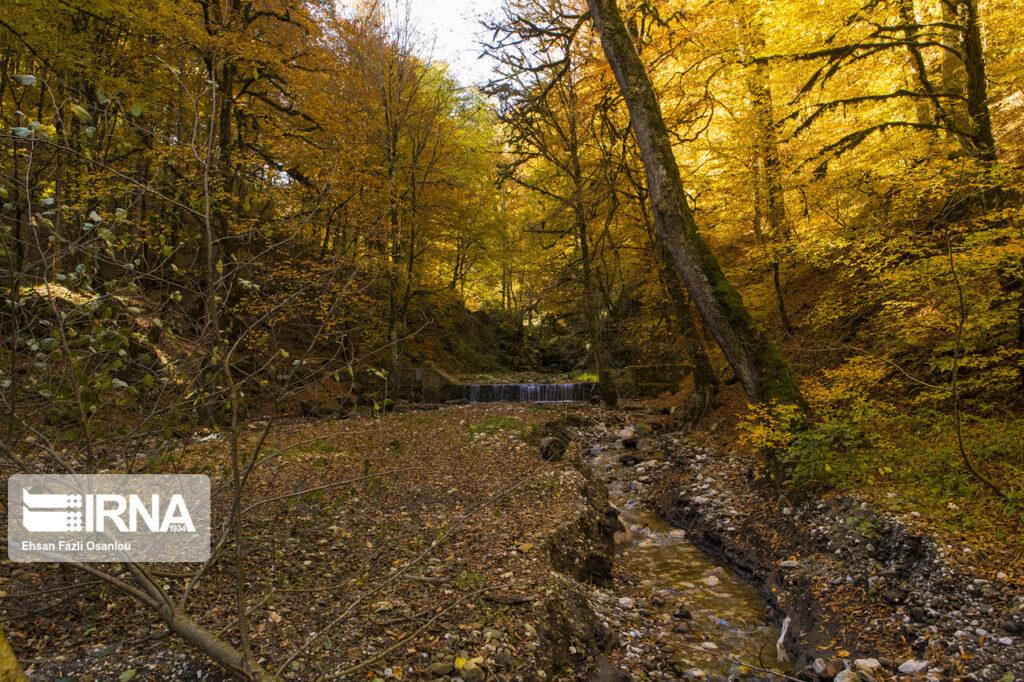 Осенние гирканские леса в Иране