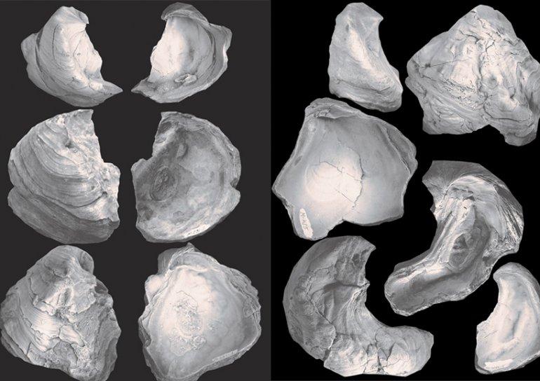 Ученые исследуют ископаемых устриц, обитавших на восточном побережье Каспия