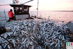 В Дагестане подвели предварительные итоги каспийского рыбного промысла за 2020 год