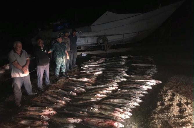 Пограничники Азербайджана задержали браконьеров, занимавшихся выловом осетровых