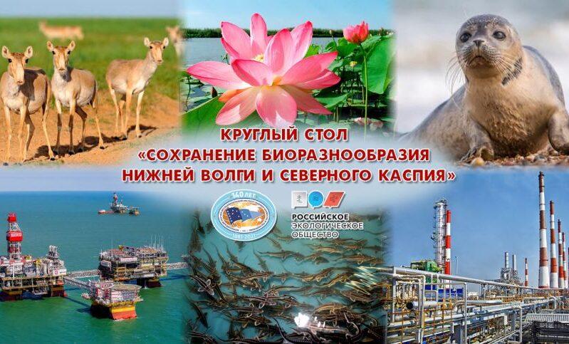 Обсуждены вопросы сохранения биоразнообразия Нижней Волги и Северного Каспия