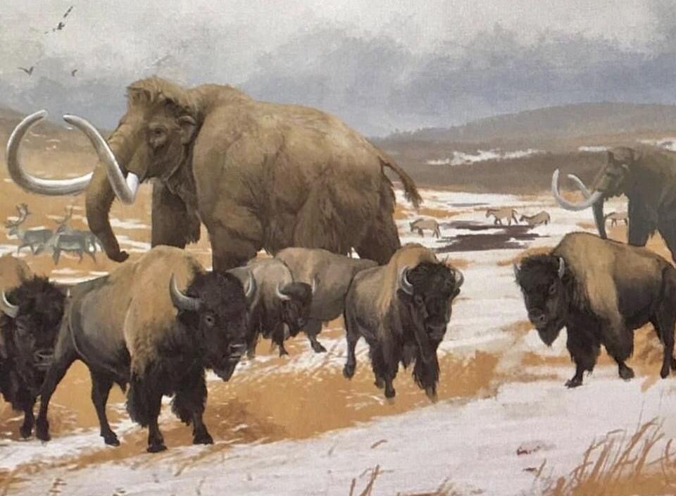 В Астраханской области археологами обнаружены останки плейстоценового бизона