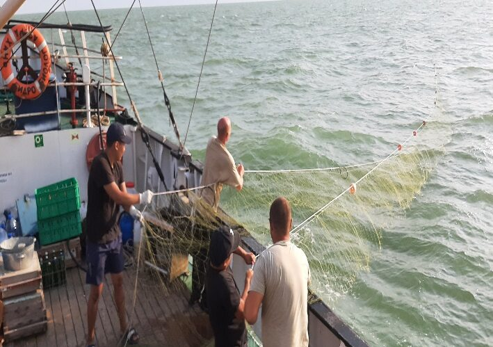 Подведены итоги съемки осетровых рыб на НИС «Гидробиолог»