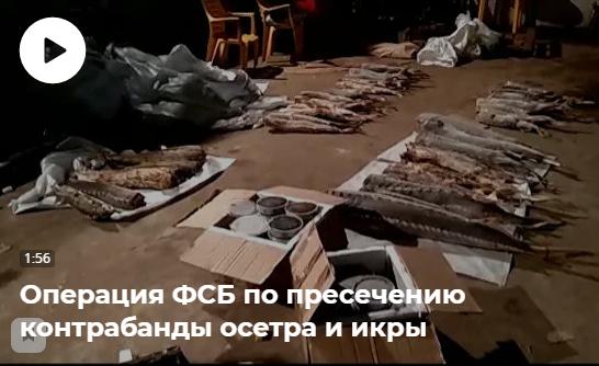 В России пресечён канал поставки незаконно добытых осетровых рыб в Московский регион